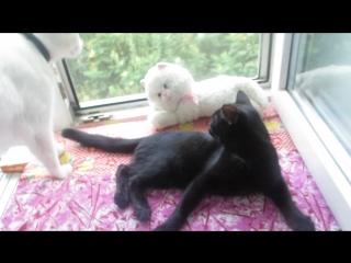 Два котика ищут дом! Черному котику 4 месяца, пролечен от глистов и обработан от блох, шустрый и ласковый. Умничка, приучен в ту
