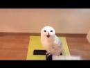 Ржачно.Сова смеется как человек.Самое смешное видео про животных!!