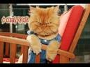 Приколы про котов 2018 – Смешные животные с озвучкой от Domi Show