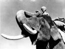 Sabu - Toomai, el de los elefantes - Robert J. Flaherty, Zoltan Korda (1937).