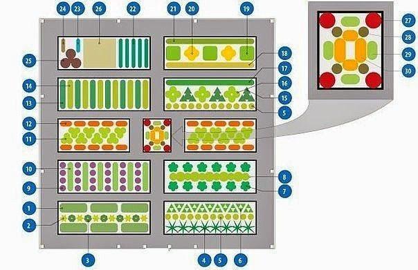 Схема овощной клумбы, где все культуры находятся в выгодном для них соседстве.