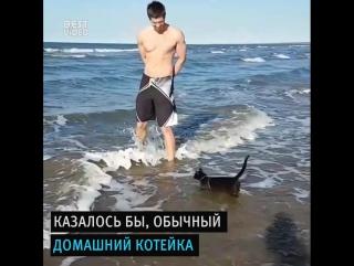 Котик, который любит купаться