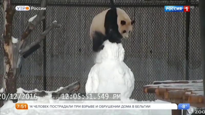 Умилительное видео. На кадрах запечатлено, как три панды по кличкам Эр Шун, Цзя Юю и Цзя Панпан нападают на снеговика!