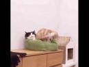 чёрно-белому коту нужен новый деванчик