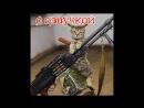 Приколы с котами – озвучка животных – Захват мира кота Мурзика часть 13