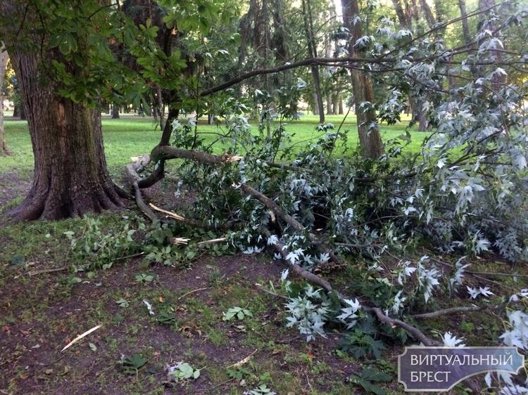 В парке города Бреста опять рухнула ветка. Никто не пострадал
