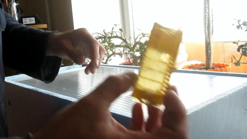 Вывод пчеломаток из маточников в новом заводском инкубаторе.Проверка на вывод и качества пчеломаток.