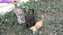 Приколы с животными Коты Котята