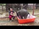 Неуклюжий слонёнок взорвал интернет, искупавшись в ванне