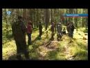 Учёные вывели на чистую воду серых лесорубов в Омской области