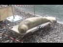 Тюлень отдыхает