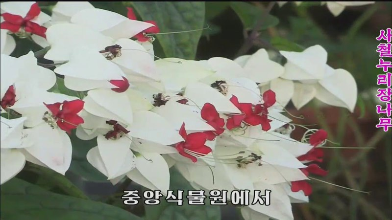 Choson TV: KCTV 종합보도 04월 17일 107 (2018) [HD] [KOREAN]