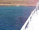 Заплыв на 500 метров Когда чуть не отстал от катера