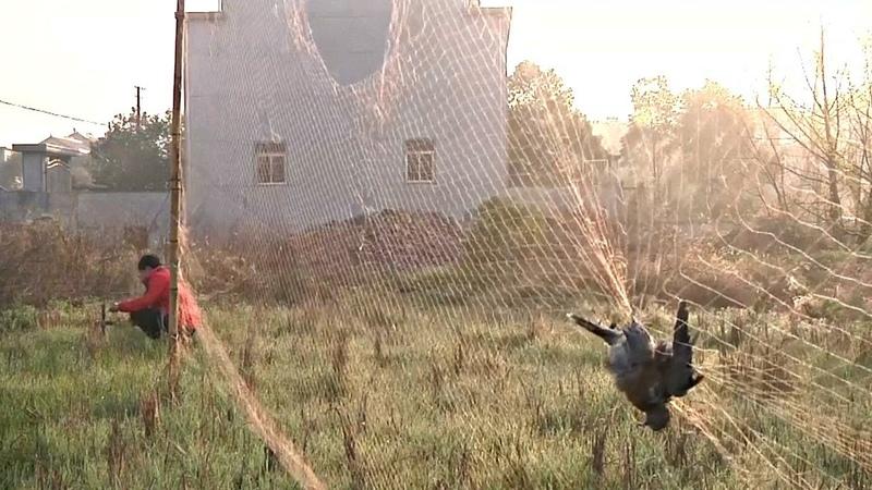 Необузданное браконьерство в Китае губит перелётных птиц