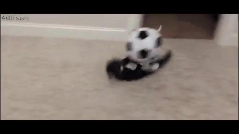 Футбольная лихорадка!