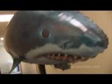 Air Swimmers_ летающие рыбы и акулы (радиоуправление)