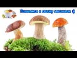 Готовимся к новому сезону по заготовке продуктов в сушилке. (02.18г.) Семья Бровченко.