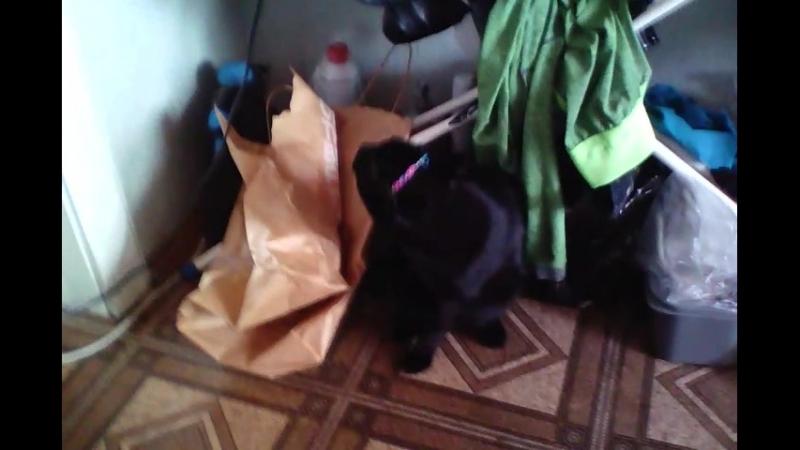 Кот и резинка
