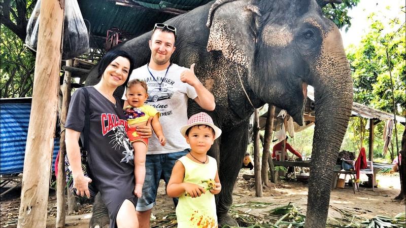 Что посетить в Таиланде, чтобы отдых прошел не зря! Незабываемые впечатления от кормления слонов.