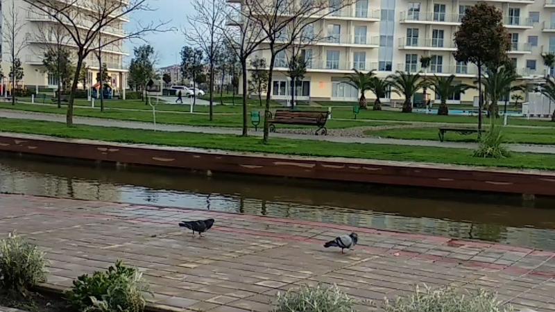 Голодный и злой сочинский голубь на территории отеля Сочи парк