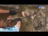Найденная при раскопках в Тыве мумия оказалась останками молодой женщины I века