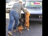 Собаки - помощники