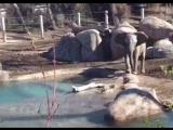 Слон и моська...