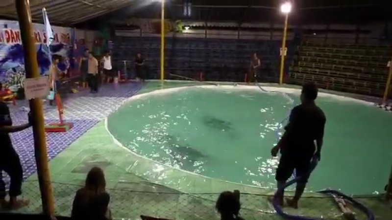 Indonesia's traveling circuses subject dolphins to horrific cruelty TAKE ACTION