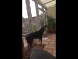 Поющий собакен