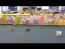 ОТ ❤ХРАНИТЕЛИ ВЕРНОСТИ❤ - doggii