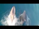 дельфины)))
