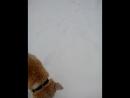 Гулянка с Шариком в снегопад