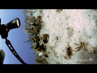 Dolphin Encounter - Stinky @ Hepps, Grand Cayman, Cayman Islands