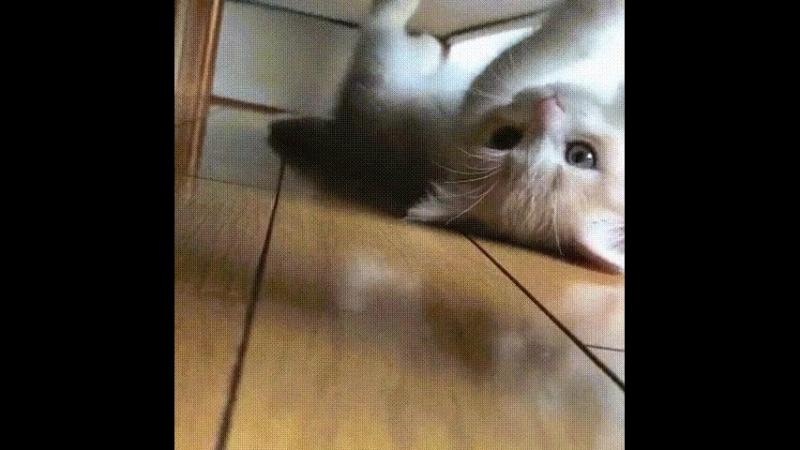 Супер-развлекалово под кроватью....😺