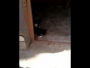 21.04.18 - Котята ищут дом. Мальчишки. 067 989 36 29 Люба