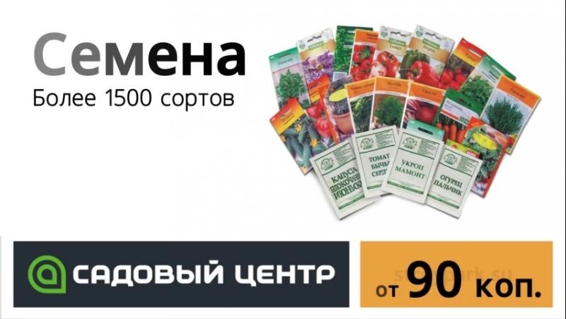 Семена-852x480-2