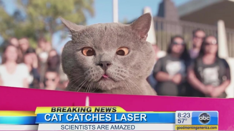 The Cat Who Finally Caught the Laser