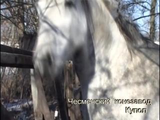 4,,Орловский рысак - достояние России,,