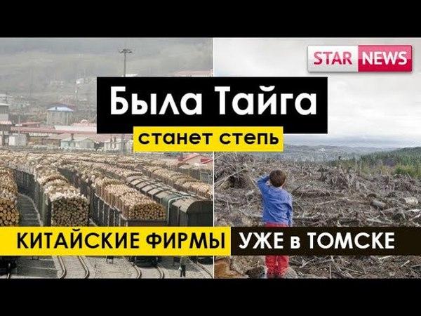 СКОРО ТАЙГА СТЕПЬЮ СТАНЕТ!Китайские фирмы уже в Томской области! Россия 2018!