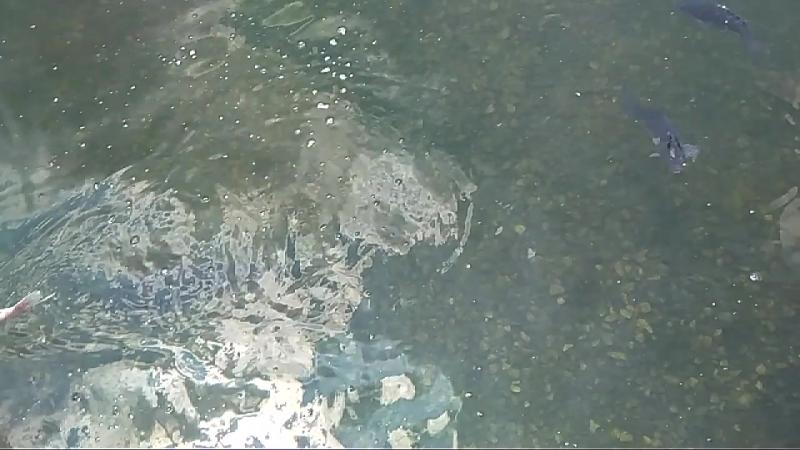 Рыбки плавают в парке. Очень красиво. Никто не бросает мусор. Не ловит их. Есть даже пара осетров.