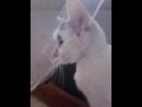 кошка чихает 😂