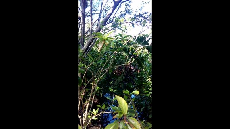 Вы слышите в джунглях этот трубный глас неведомого существа?
