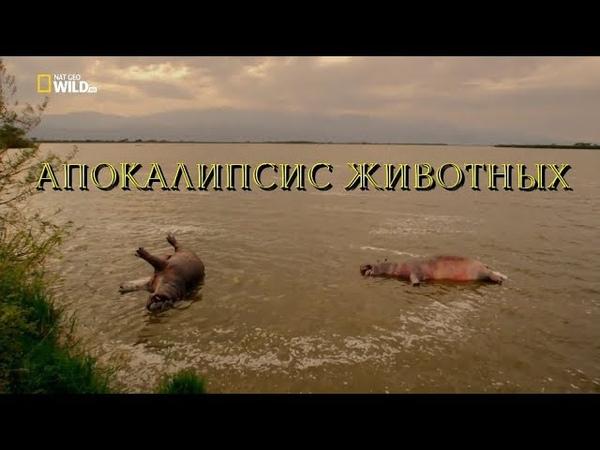 Nat Geo Wild: Апокалипсис животных (1080р)