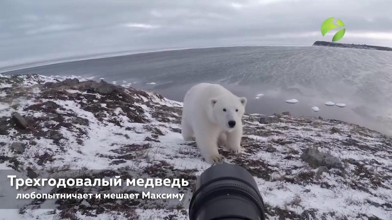 Хозяин Арктики и фотограф » Freewka.com - Смотреть онлайн в хорощем качестве