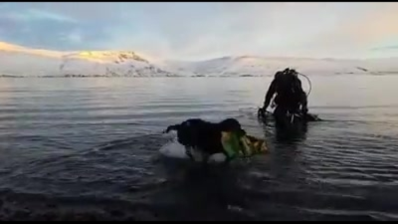 Собака - лучший друг дайвера
