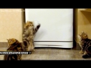 Смешные котята,кошки и коты.