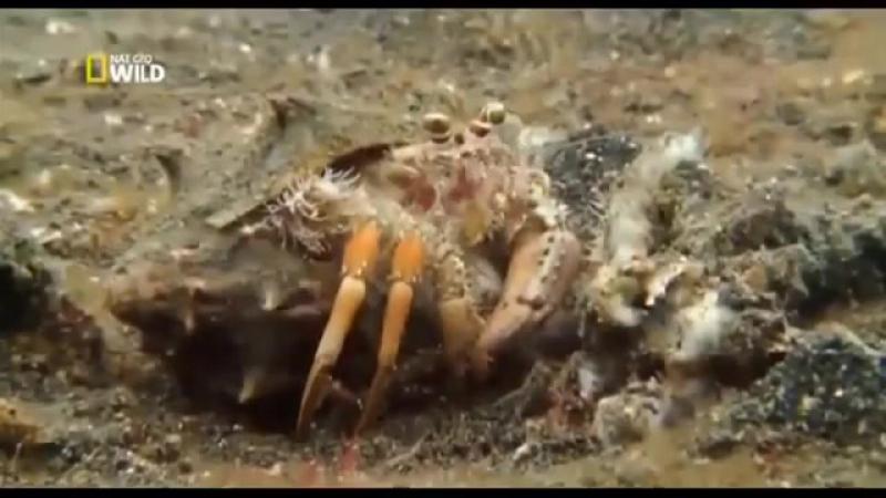 Тайны океана. Подводный мир. Документальный фильм