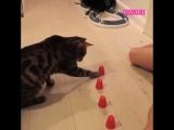 Очень внимательный кот