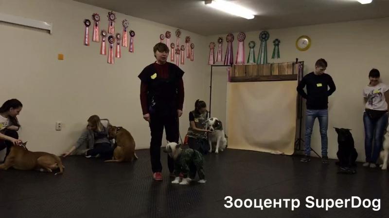 Конкурс поэзии в SuperDog❗Команда Натальи и Джастина (КХС, возраст 3 года) 🤗 Волнение зашкаливает, но вы справились на 5 👍🏼