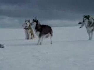 Видеоролик супер клип про волков - скачать и смотреть бесплатно онлайн видео ролик и клип, видеоприкол на [vk.com/FilmBox2013]